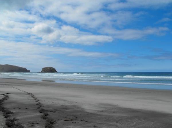 Allans Beach Otago Peninsula