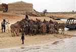 This herd of donkeys needed ferried across the Niger river to Timbuktu