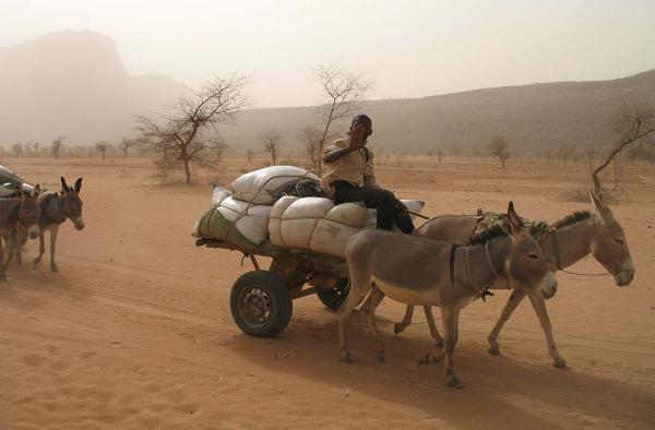 Donkey carts are more common than cars on the dusty backroads of Mali